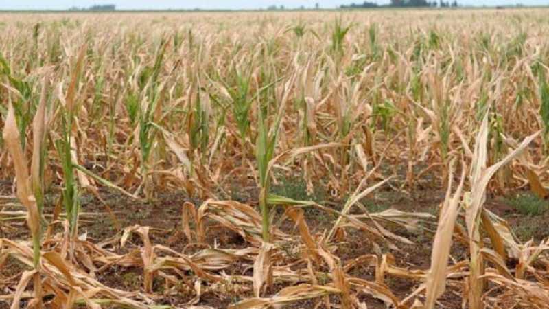 Diputados: piden al gobernador Lifschitz que declare la Emergencia Agropecuaria por la sequía