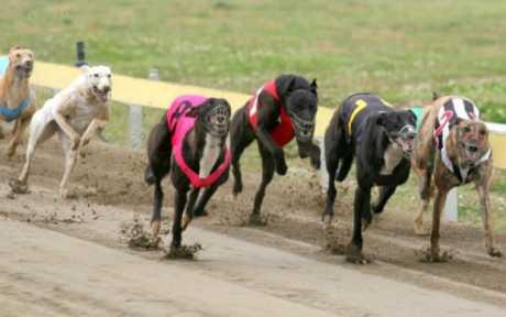 Santa Fe es la primera provincia en contar con una ley para prohibir carreras de canes
