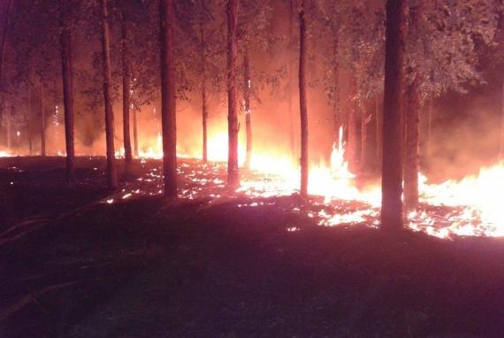 Importante incendio en el Bosque de Celulosa