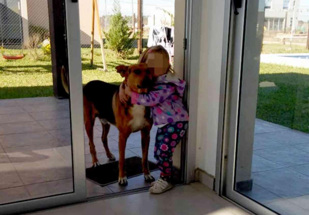 Un perro callejero mordió en la cara a una nena de 2 años
