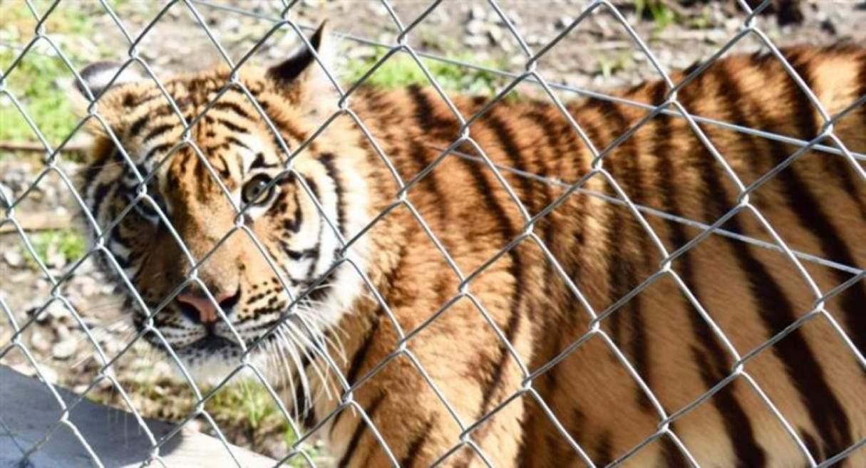 Rescataron más de 300 animales en cautiverio en un predio rural cerca de Mar del Plata