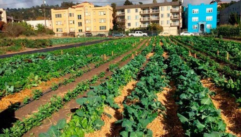 Lifschitz propone una ley de agricultura periurbana