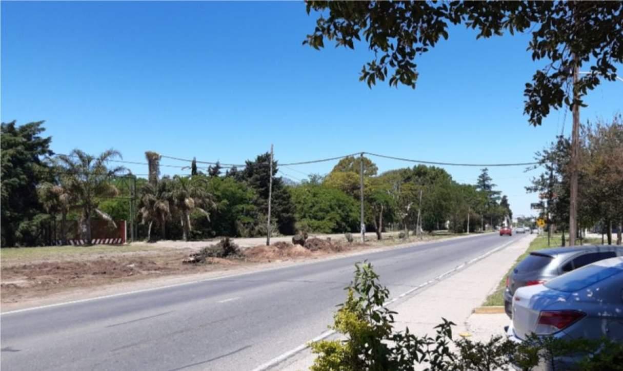 Ambientalistas y vecinos repudian la tala de árboles en Fray Luis Beltrán