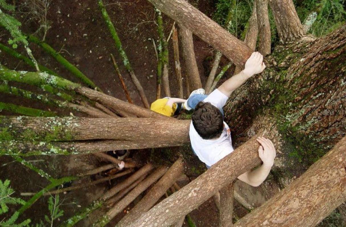 Puerto San Martín: Trepada en un árbol intentaba cortar cables con un machete