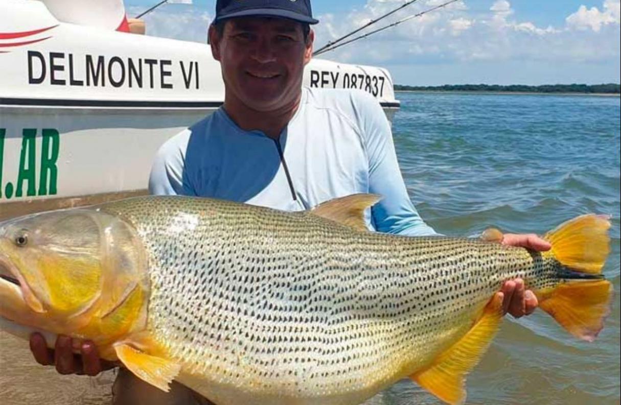 Pescaron un dorado gigante en el Río Paraná
