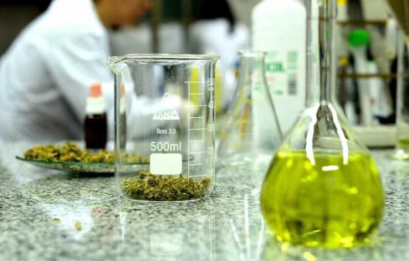 Cannabis medicinal: se habilitaría el cultivo personal y la venta de aceites en farmacias