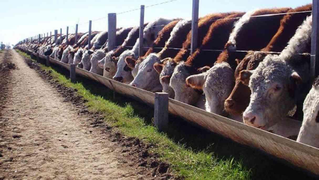 Santa Fe: Buscan regular la actividad de los feed lot para evitar consecuencias ambientales