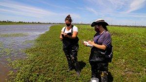 Investigadores de la UNR ya trabajan en el humedal